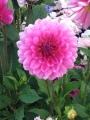 Beautiful SF Flower